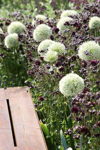 Nine favourite plants of Andy Sturgeon, the designer of The Daily Telegraph's   garden at the Chelsea Flower Show 2010.