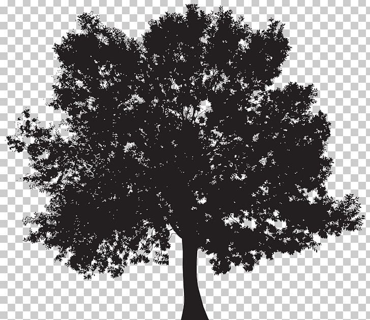 Silhouette Tree Png Black And White Branch Clip Art Clipart Monochrome Tree Silhouette Black And White Tree Png