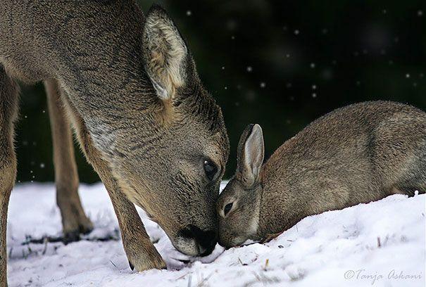 Real life Bambi and Thumper!!