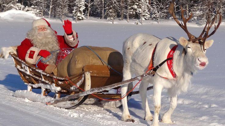 Super-líquenes da rena do Papai Noel - Pai Natal Lapônia Finlandia Rovan...