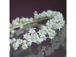wianek na komunie z kwiató żywych - Szukaj w Google