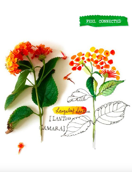 Botanicals by Carolyn Gavin, how we love these! More in Flow Magazine 6-2015 (Dutch edition)
