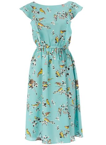 aqua bird tea dress: Aqua Dress, Style, Tea Dresses, Dorothy Perkins, Bird Prints, Birds, Perkins Aqua