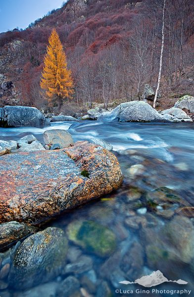 BLUE AND YELLOW - Natural Park of the Maritime Alps, Chalk Creek, Valdieri (CN)