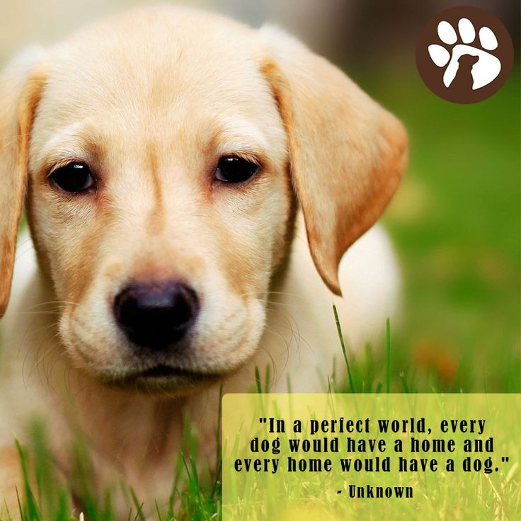 """""""In a perfect world, every dog would have a home and every"""