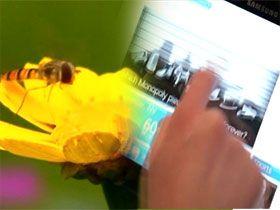 Dünyanın en hızlı bilgisayarıyla yarışan bal arısı! Video