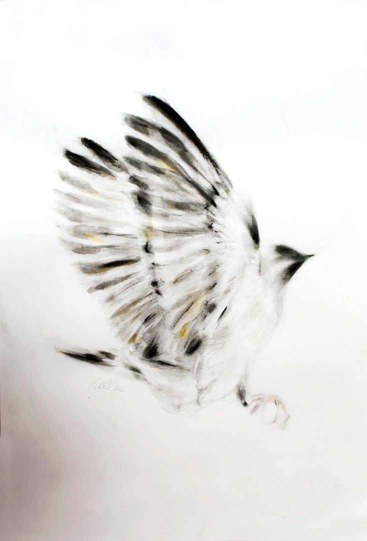 artfinder outstretched wings by kellas campbell ink and