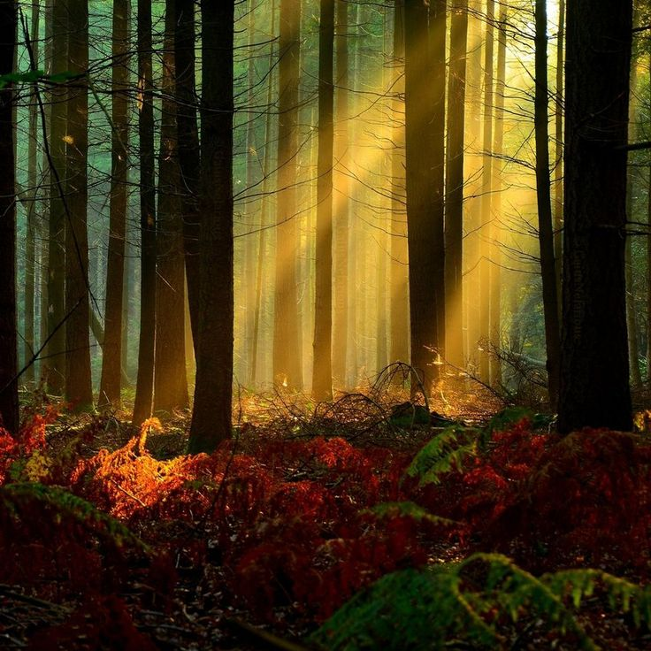 24 Best Images About Beautiful Sunrise On Pinterest Sun