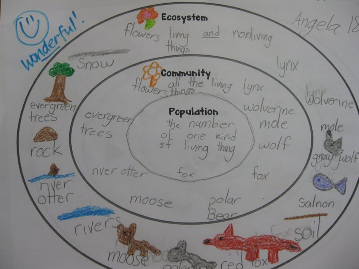 Ecosystem community and population concentric circle Color change definition science