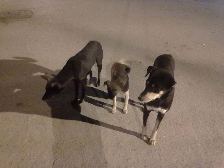 Street Dog's Happy Family seeking food at mid night..................