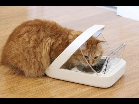 10 Things Your Cat Wants On Amazon - YouTube