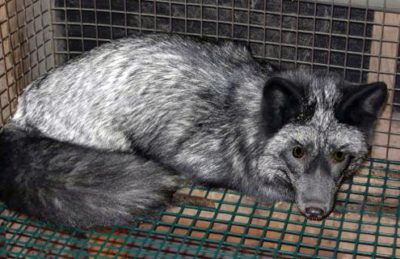 PLEASE SIGN Animals are electrocuted and have their hair ripped out in farms so that their fur can be made into clothing and sold at an online retailer. Sign this petition and demand the company stop selling fur and angora wool products.