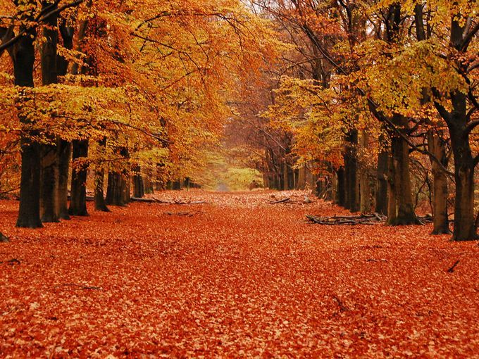 Hoenderloo Forest Walk, Hoge Veluwe National Park, Netherlands: Hoge Veluwe National Park -  If you find yourself in the Netherlands in the fall, try the forest walk starting at the Hoenderloo entrance. In total, this trail is approximately 11 miles long (ride a park 'white bike').