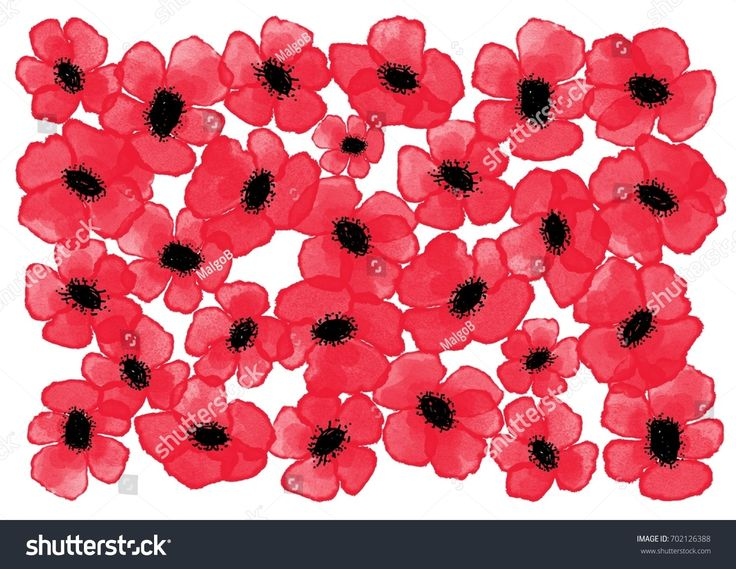 Digital watercolor poppies background - invitation, poster theme in intensive red color on the white background