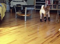 13 Reasons Why Cats And Dogs Need To Wear Socks ALL THE TIME - Literally could not top laughing!