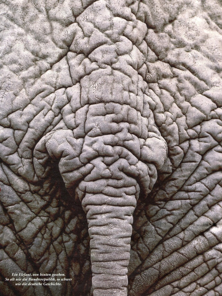 And here is a picture of an elephants bum. Be happy with your life. :D
