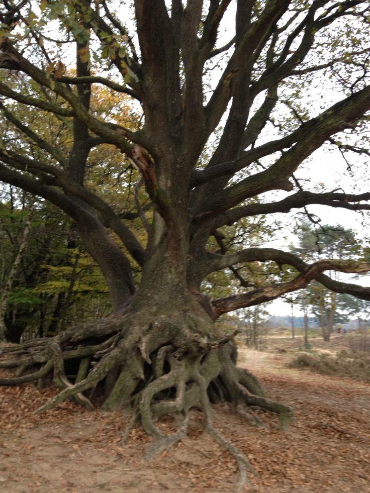 Beautiful tree Bakkeveen Holland