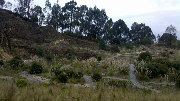 #Bogotaniando por ancestrales territorios de hija del último Zipa de #Bacata. #Soratama Maravilloso proyecto #Reforestacion @AmbienteBogota