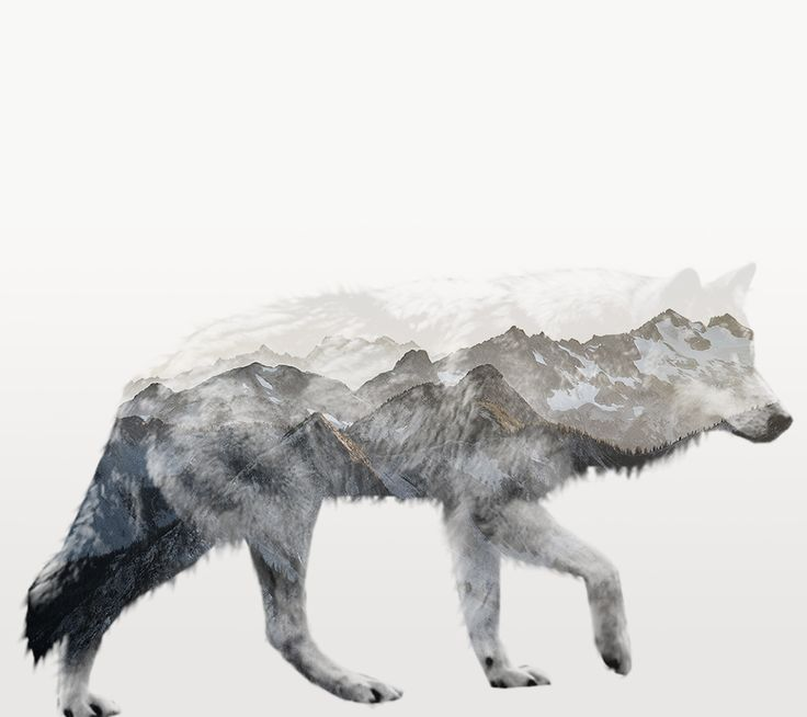 A great double exposure technique used by one of our designers here at Epicdev. http://www.epicdev.co.za/graphic-design #graphicdesign #design #logo #double #exposure #photoshop #photography #wolf #mountains