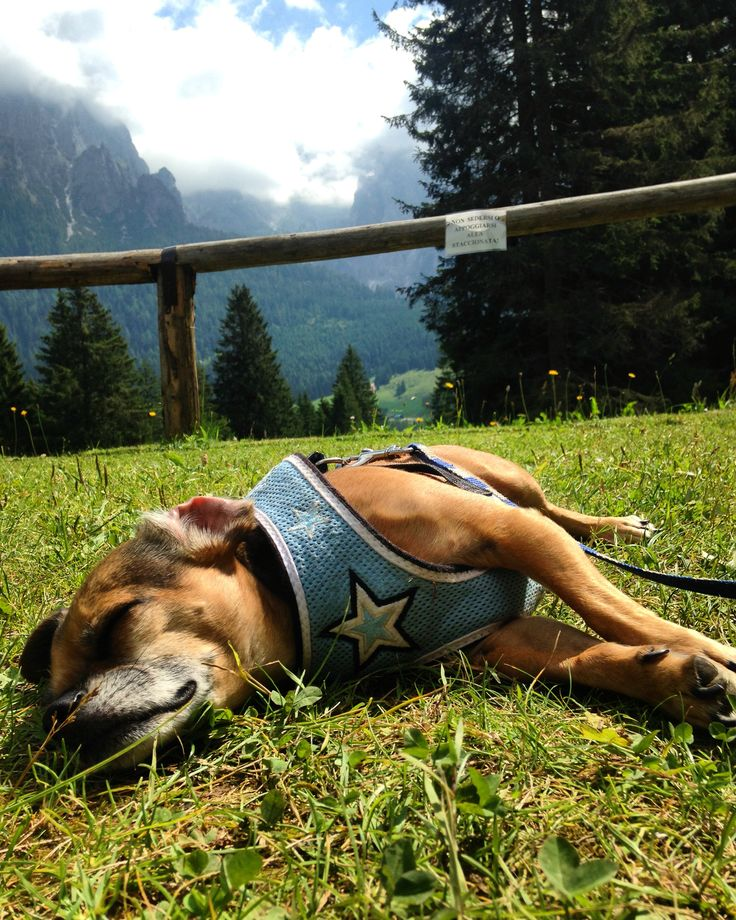"""After a """"hike"""" up the hill... Too tired to move."""