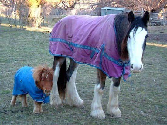 Si vous êtes comme moi, vous adorez les bébés animaux qui nous font dire « oh, il est trop mignon ! ».  Découvrez l'astuce ici : http://www.comment-economiser.fr/22-photos-bebes-animaux-qui-vont-vous-faire-craquer.html?utm_content=buffer9798d&utm_medium=social&utm_source=pinterest.com&utm_campaign=buffer