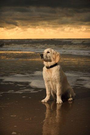 beach dog ♡... Re-pin by www.StoneArtUSA.com ~ affordable custom pet memorials for everyone.