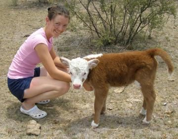 Mini moos | A great article on miniature cattle and the benefits of having them for small family farms
