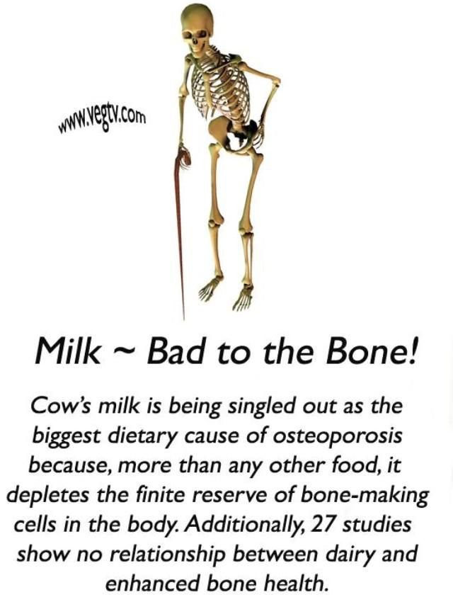 America has one of the highest rates of dairy consumption per capita AND the one of the highest rates of osteoporosis per capita. Interesting?