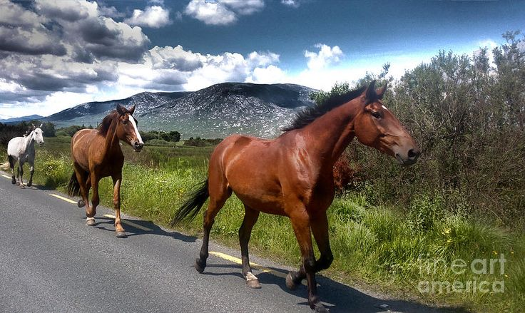 'Into The West' Photograph by Alan Hogan.  #fineartamerica #faa #ireland #oughterard #galway #horses #gallop #häster #intothewest #landscape #clouds #hills #westofireland #visitireland #visitgalway #discoverireland #beauty #nature #photo #photography #foto #bilder #kuva #ontheroad #road #traffic #west #wildwest