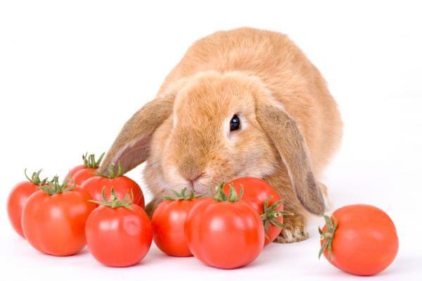 Cómo cuidar un conejo belier.