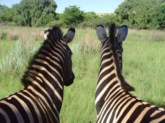 Johannesburg Tourism: Best of Johannesburg, South Africa - TripAdvisor