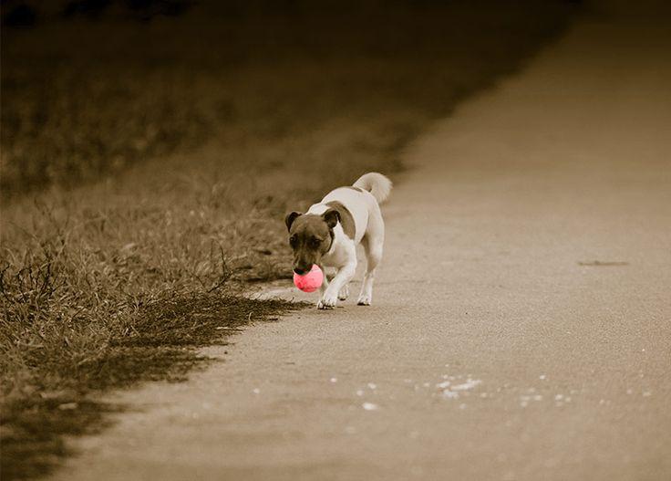 WallArt - Dog With Tennis Ball - Presentorium