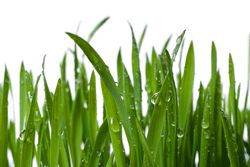 Use Your Lawn Sprinkler System to Conserve a Precious Commodity | Home Maintenance Tips