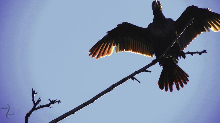 Aves de Valdivia, Chile