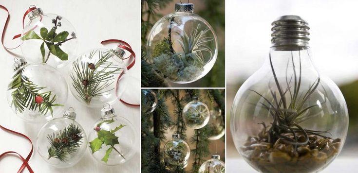 Julpyssel – levande julgranskulor som är ett måste för växtnördar!