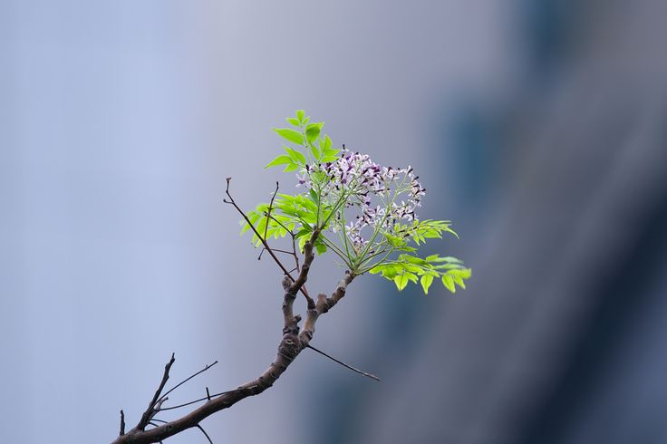 Flowers on a tree top