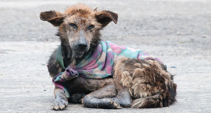 This is it: Giving Tuesday. #givingtuesday Start the season of giving by showing the world what generosity looks like. Help animals who have no one to keep them safe. Around the world, millions of street dogs wander the streets without protection...