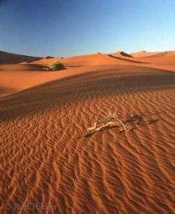 Endless sand dunes at Sossusvlei within the Namib Desert in Namibia, Africa.