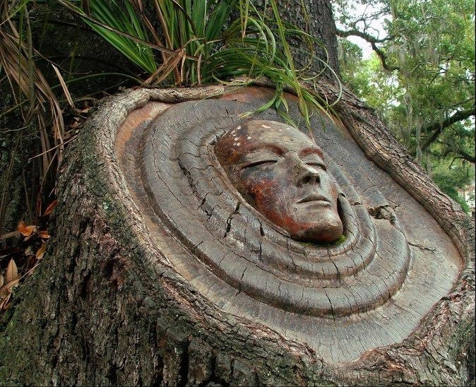 Best images about tree stump ideas on pinterest