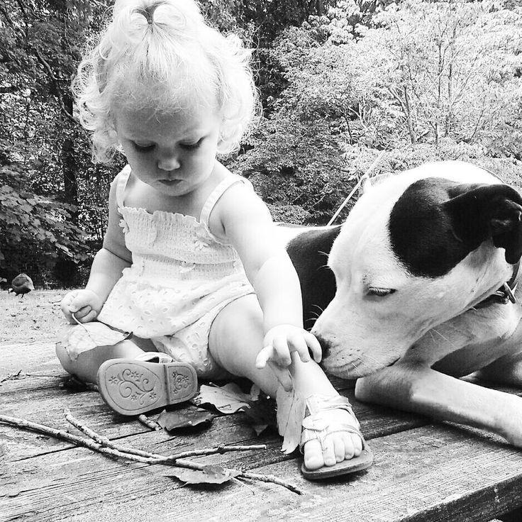 Eisleigh és Clyde cseperednek  Pitbullok és gyerekek? - Hírek  #eisleighandclyde #pitbull #kutya #dog #baby #cute #kutyabaráthelyek #kutyabarathelyek