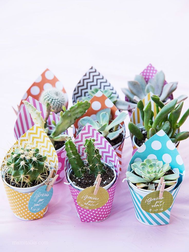 How to make Mini Succulent favors -MamiTalks.com