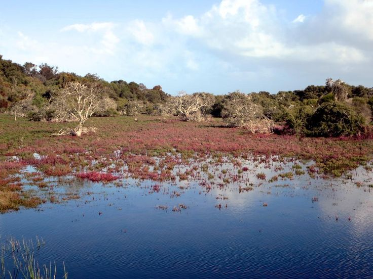 The Vasse-Wonnerup Estuary at Busselton, Western Australia, provides habitat for over 80 species of waterbirds.