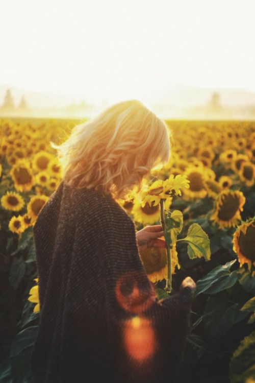 Take a photo in a sunflower ffield