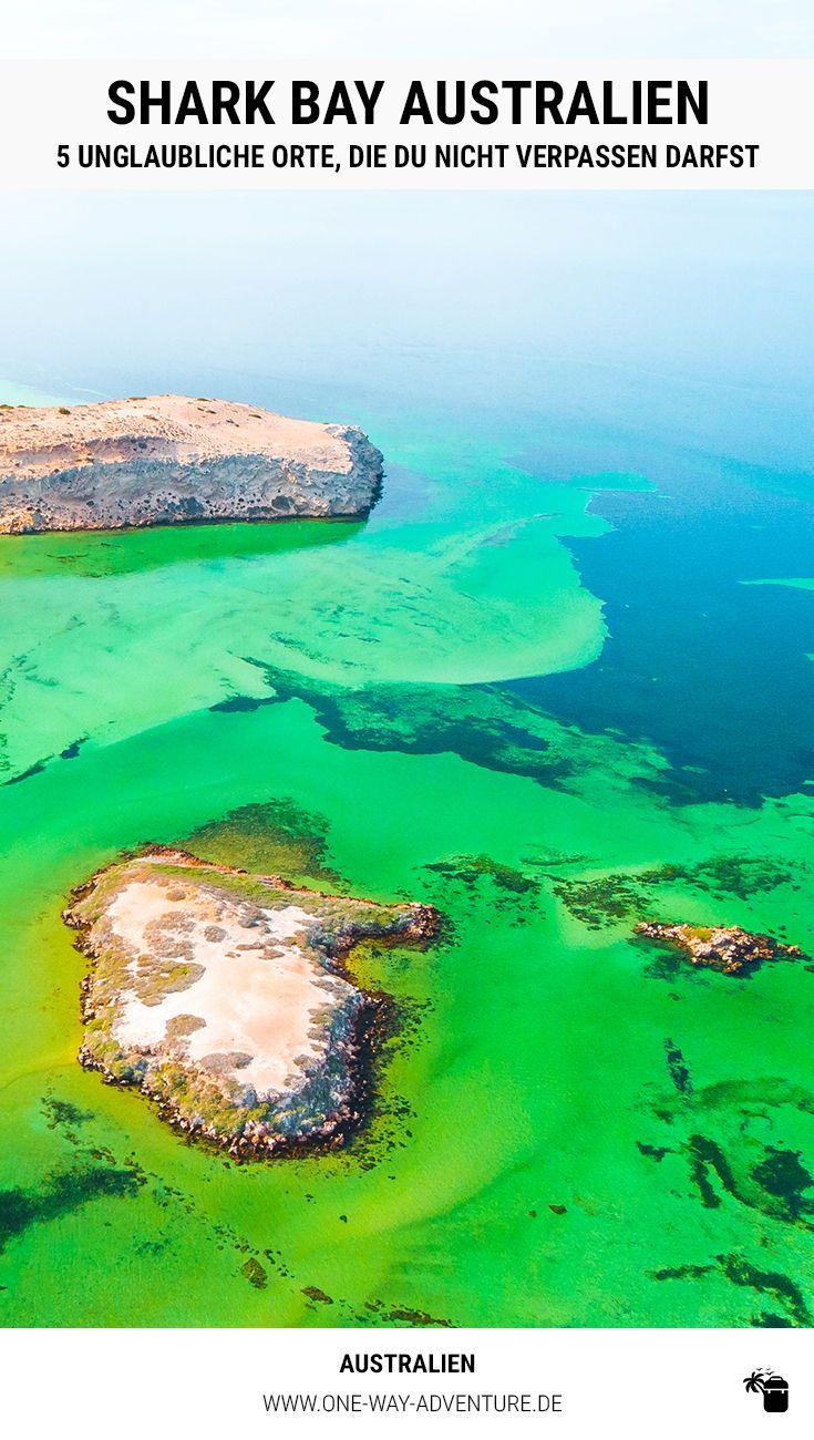 Shark Bay: 5 Highlights, die du auf keinen Fall verpassen darfst!