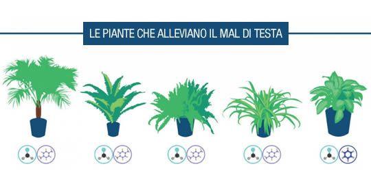 5 piante d'appartamento che alleviano il mal di testa   Rimedio Naturale