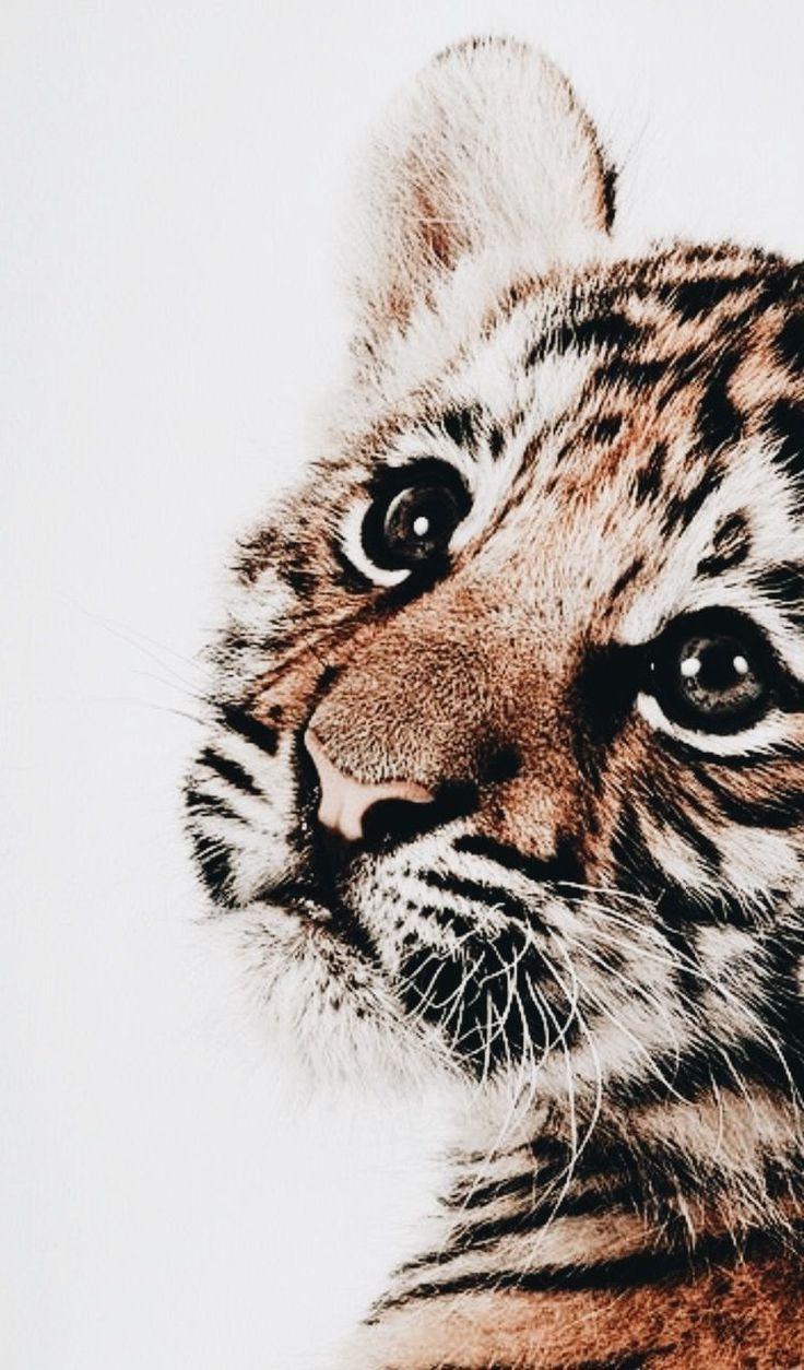 Tiger nursery print