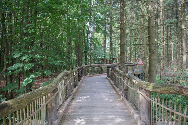 Kermeter, Wilder Weg, barrierefrei wandern, Eifel, NRW