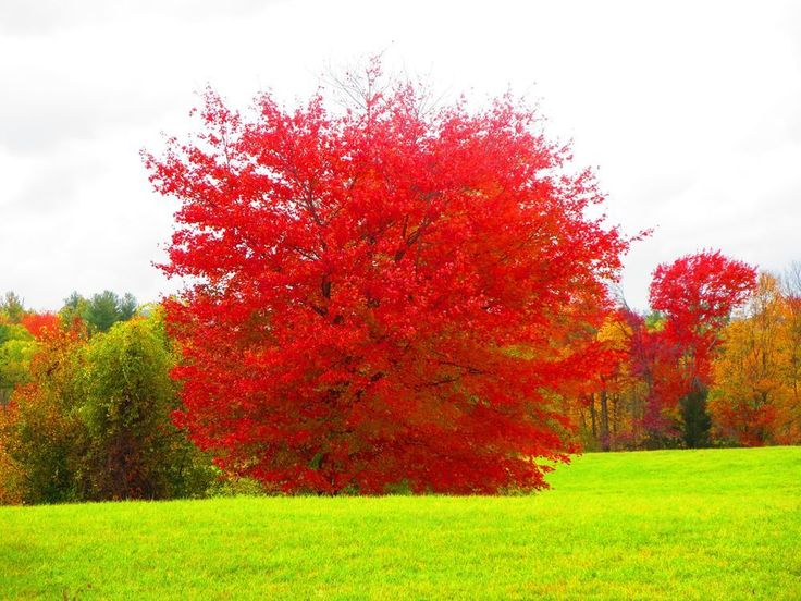 Went to Check on prints of a few photos and along the way saw this Tree with red leaves