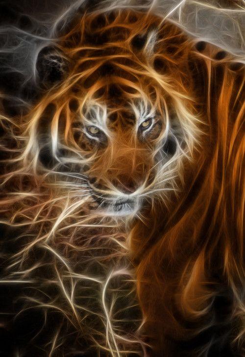 Tiger Wallpaper Mystical