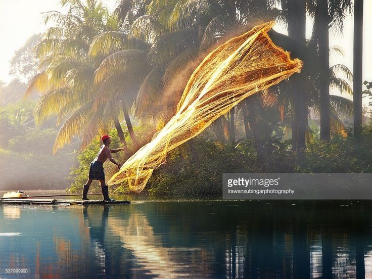 A man casting a net to catch fish on a sunny morning, the sun illuminates the background to give a golden hue on the stocked net.